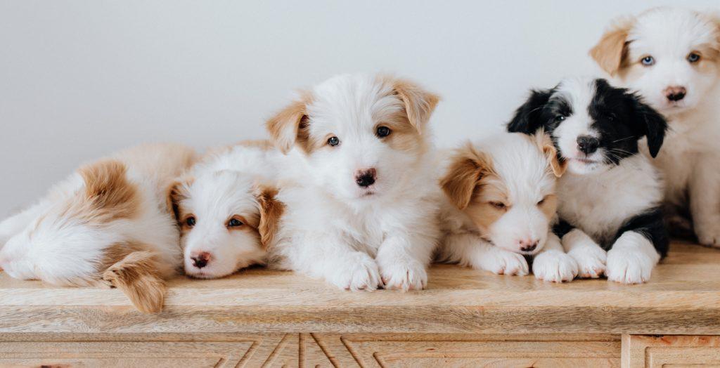 Legjobb kutyanevek